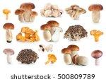 boletus edulis  russula... | Shutterstock . vector #500809789