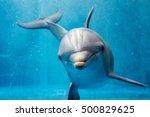 Dolphin Portrait Detail Of Eye...