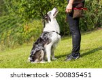 Stock photo dog school 500835451