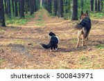 Stock photo dog and cat outdoors in autumn forest back to camera 500843971