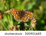 Small photo of brown and orange butterfly - Melitaea atalia (Melitaea athalia) - sitting in the summer on a meadow