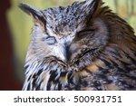 portrait of the eurasian eagle... | Shutterstock . vector #500931751