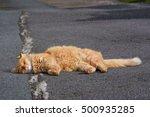 Beautiful Cat On Sidewalk