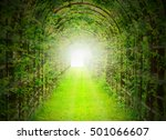 Green Tunnel With Sun Rays In...