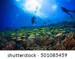 big school of yellowfin... | Shutterstock . vector #501085459