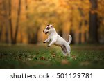 Autumn Mood. Jack Russell...