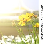 flowers at sunrise | Shutterstock . vector #501144685