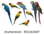 set of beautiful macaw birds... | Shutterstock . vector #501163687