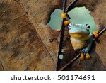 flying frog  frogs  tree frog ... | Shutterstock . vector #501174691