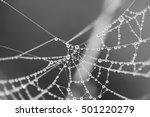 Cobweb In Dew Drops. Rain Drop...