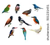 big set of birds from thailand. | Shutterstock . vector #501231451