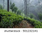 tea plantations  sri lanka | Shutterstock . vector #501232141