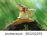 frog on snail  frog riding... | Shutterstock . vector #501232255