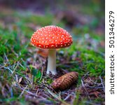 Small photo of Amanita muscaria in a forest