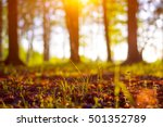 Close up spring nature landscape. Flowering green forest on spring sunset light. Macro shot of  forest ground in the city park. Blurred spring background with copy space. Ecology and nature concept.