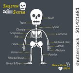 human skeleton and all name of... | Shutterstock .eps vector #501421681