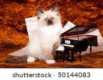 Ragdoll Kitten With Miniature...