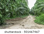 dirt road in the palm oil field ... | Shutterstock . vector #501467467