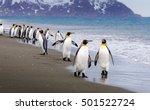 flock of emperor penguins walk... | Shutterstock . vector #501522724