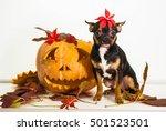halloween dog    Shutterstock . vector #501523501