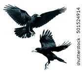 Small photo of Birds - Rook (Corvus frugilegus) isolated on white background. Mix two birds.