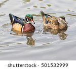 A Male And Female Wood Duck...