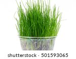 A Pot With Green Grass On Whit...
