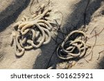 Small photo of Heaps of Lugworm, Arenicola marina, in the tidal flats of the North sea at low tide - Selected focus, narrow depth of field
