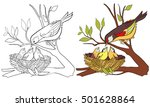 Coloring Book Page Bird And...