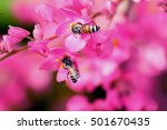 Wildflowers In Pink With Bees...