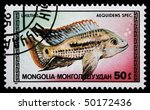 Small photo of MONGOLIA - CIRCA 1987: A postage stamp printed in Mongolia shows aquarium fish Aequidens spec, series, circa 1987