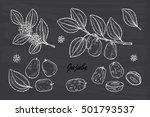 medicinal plants set. exotic... | Shutterstock .eps vector #501793537