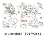 medicinal plants set. exotic... | Shutterstock .eps vector #501793561