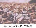 toadstool growing on the... | Shutterstock . vector #501871621