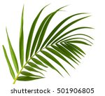 green leaves of palm tree... | Shutterstock . vector #501906805