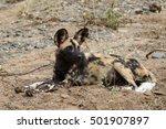 wild dogs at den | Shutterstock . vector #501907897