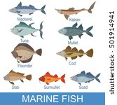 marine fish identification... | Shutterstock .eps vector #501914941