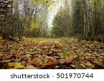 The Autumn Woods. Footpath In...