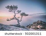 tree on rock in crimea  toned... | Shutterstock . vector #502001311