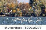 group of swans flying over the... | Shutterstock . vector #502015279