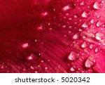 Closeup Of Rose Petal With...