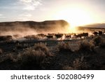 Cattle Drive In Oregon Desert