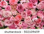 lathyrus and roses in a pink... | Shutterstock . vector #502109659