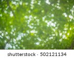 abstract light bokeh on tree. | Shutterstock . vector #502121134