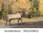 legs a lot   a newborn baby elk ... | Shutterstock . vector #502143811