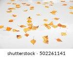 Yellow Autumn Fallen Leaves...