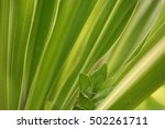 the green leaf is show in...   Shutterstock . vector #502261711