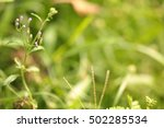 abstract natural backgrounds... | Shutterstock . vector #502285534