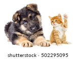 Stock photo kitten and puppy looking 502295095