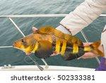 Mackerel On Hook. Bottom Sea...